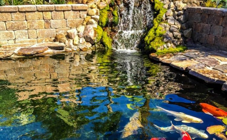 koi pond construction services