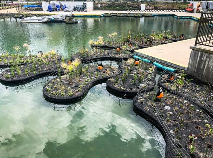 natural filtration for lakes and ponds