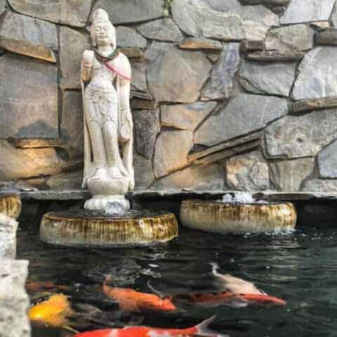 Koi Pond Rehab - Huntington Beach California - Lake Management Inc
